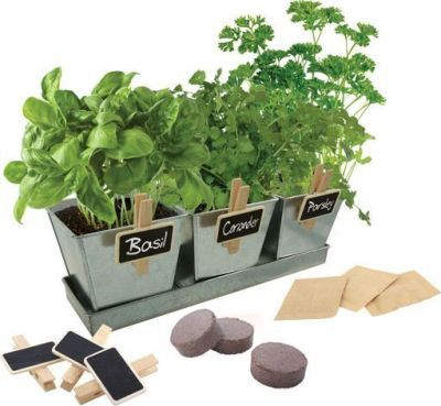 Loot.co.za - Kitchen & Dining: Paris Garden Grow Kit with 3 Galvanized Pots (Basil, Parsley and Coriander) | Food
