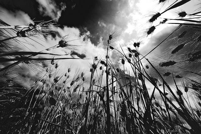 Le 25 migliori idee su fotografie in bianco e nero su for Foto alta definizione bianco e nero