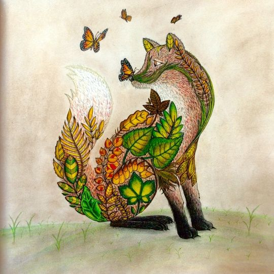 Joanna Basford Colouring Coloring Books Johanna Book Fox Diana Rainbows Wolves
