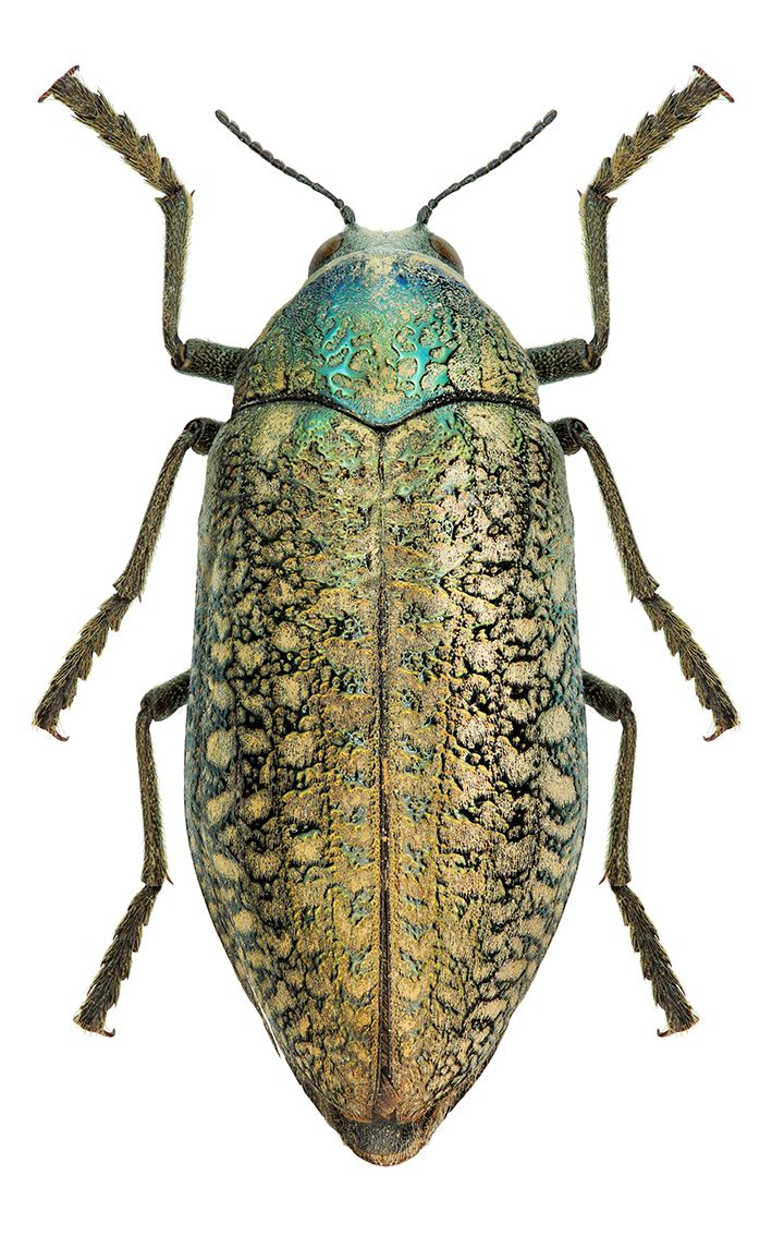 113 best insects images on pinterest beautiful bugs animals and