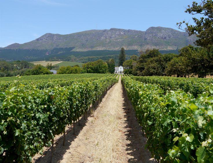#SouthAfrica #CapeTown #Vineyard #Wine