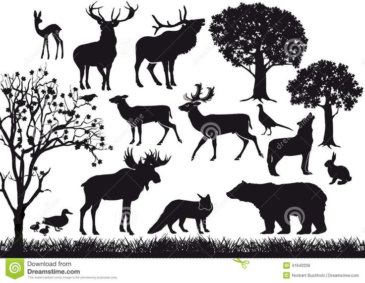Animal And Tree Silhouettes Download From Over 50