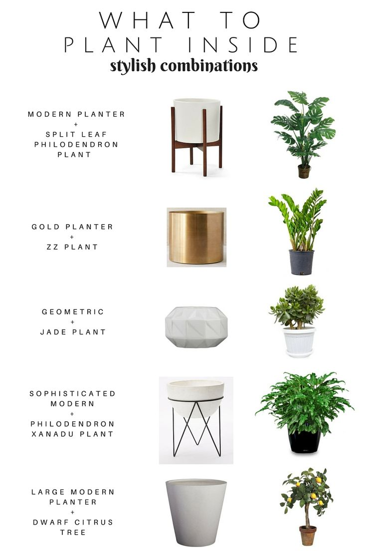 Take the guess out of what to plant iside! Sharing a Stylish Plant + Planter combinations. Modern Oh So Stylish Planters — Chic Little House