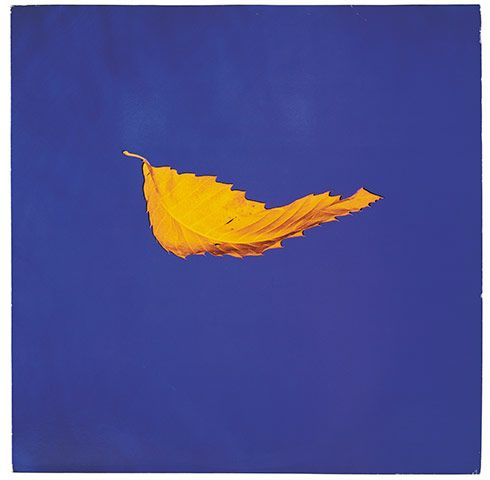 "True Faith, New Order (Factory, 1987). ""This was a first work from real life. In 1986, I happened to have a trauma in my personal life and it made me very attuned to the world around me. Suddenly, I had no filters. I was parking the car one night and a leaf drifted by the window and I thought, 'That's so beautiful.' It was framed by the windscreen, which is probably why I saw it as an image. So we did a leaf."""