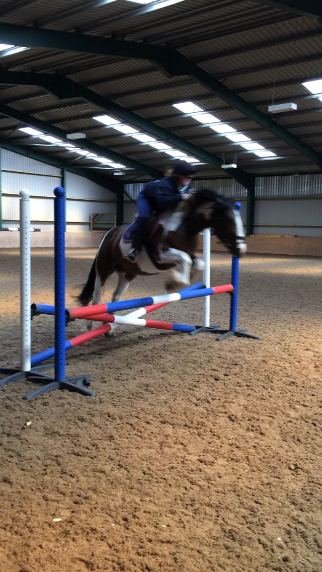 Showjump schooling #equestrian