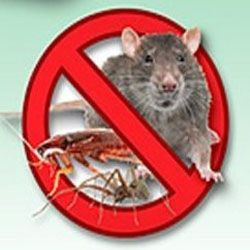 Pest Control, and getting rid of Mice naturally is a big problem all year round for millions of unlucky residents living in there homes...We find...