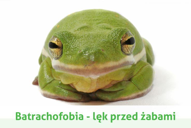 batrachofobia czyli strach przed żabami
