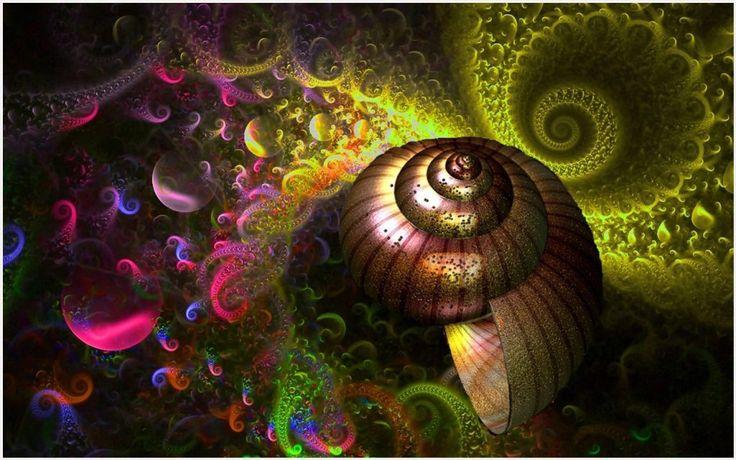 Sea Shell Abstract Art Wallpaper | sea shell abstract art wallpaper 1080p, sea shell abstract art wallpaper desktop, sea shell abstract art wallpaper hd, sea shell abstract art wallpaper iphone