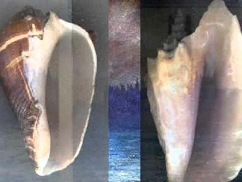 caracoles de mar/seashelld