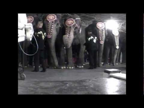 Urge Circus World to End Cruel Elephant Exhibits! | Action Alerts | Actions | PETA