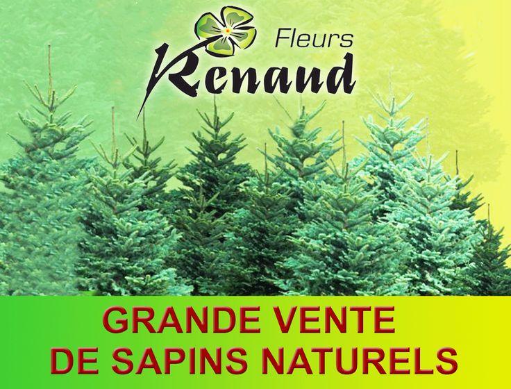 RENAUD FLEURS : LES SAPINS DE NOËL SONT ARRIVES !