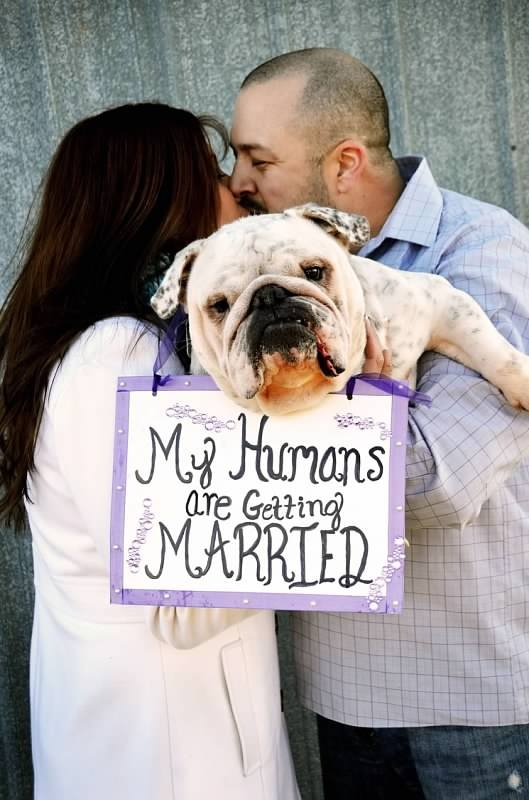 Engagement Photo Shoot with the couple's pets. Their English Bulldog holds the sign! Copyright Amber S. Wallace Photography