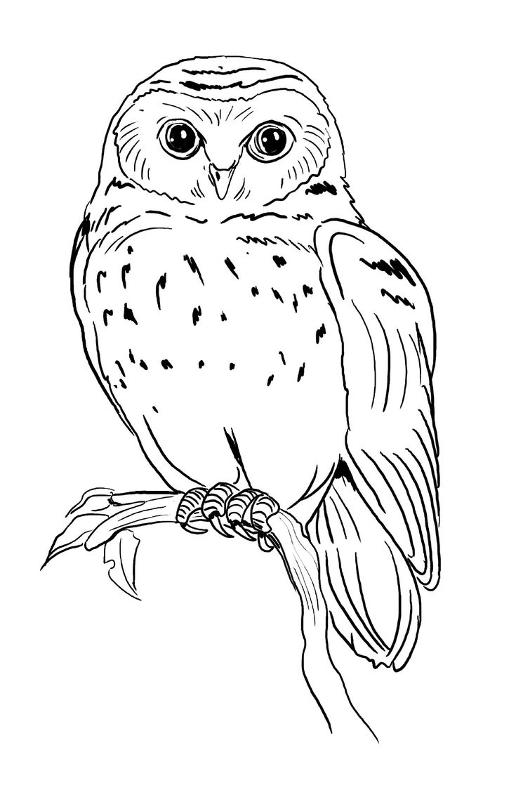 618 best owls images on pinterest owls coloring books and