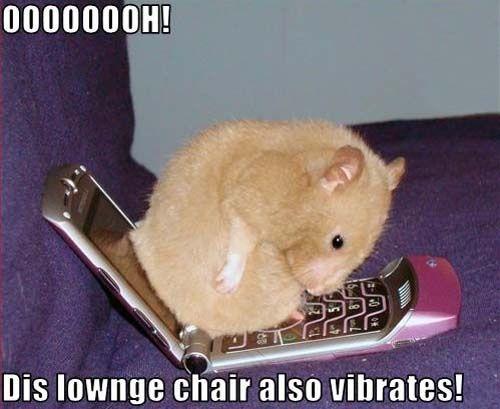 Hamster Chair