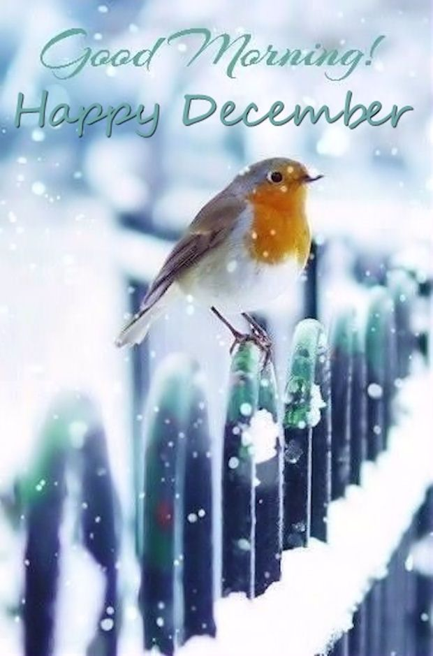 Good Morning Happy December                                                                                                                                                                                 More