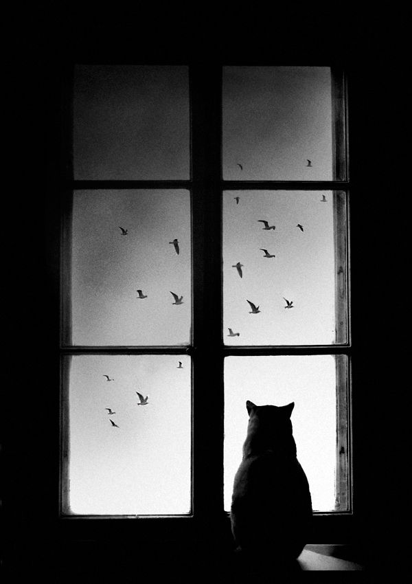 Winter Is Coming #cat: Window, Winter Is Coming, Silhouette, Kitty, Birds, Photography, Mario Pucic, Black Cat, Animal