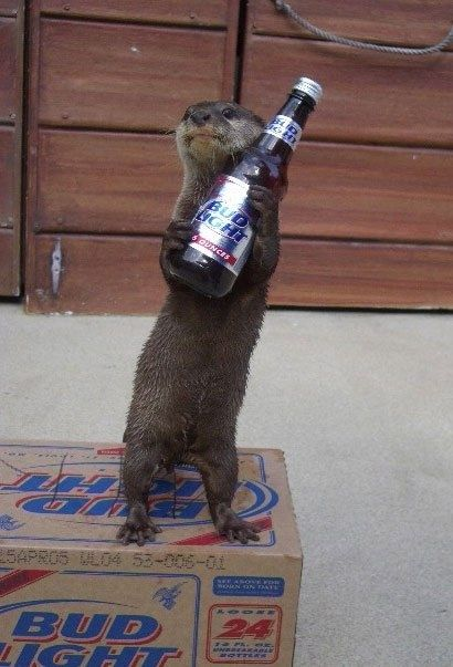 Otters really do understand how to live the good life.But could've made a better choice of beer!