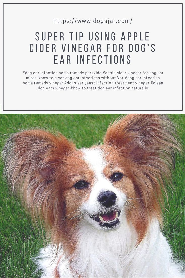 Dog Ear Infection Home Remedy Peroxide Apple Cider Vinegar