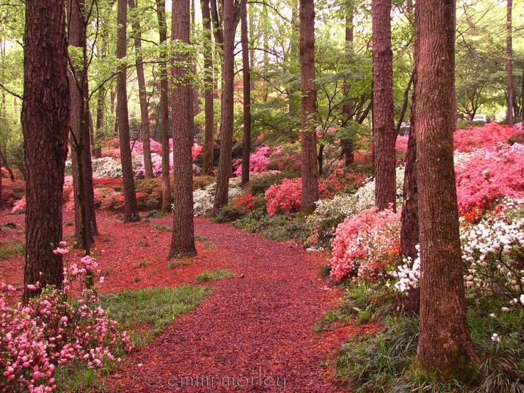 Azalea Garden at Callaway Gardens