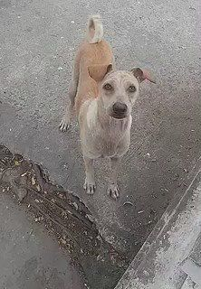 "Paisajes on Twitter: ""Ejemplo de verdadero amor canino. https://t.co/PQpnQL36lw"""