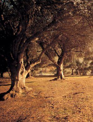 The Olive Orchard   Edible Feast via Edible Sacramento #edibleendeavors