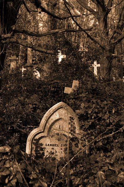 Cemetery reclaimed by the surrounding woods
