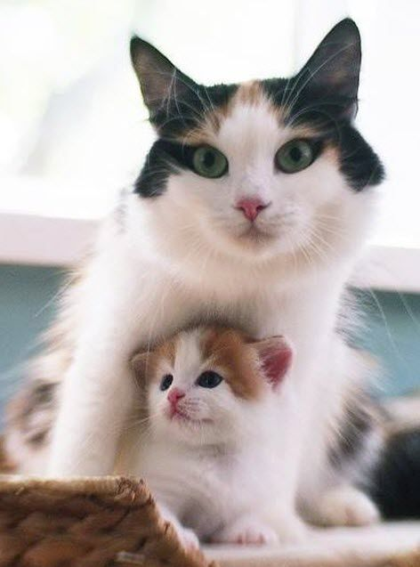 Time for an extremely cute picture of mother and her kitten.  This mother cat has a beautiful face don't you think?