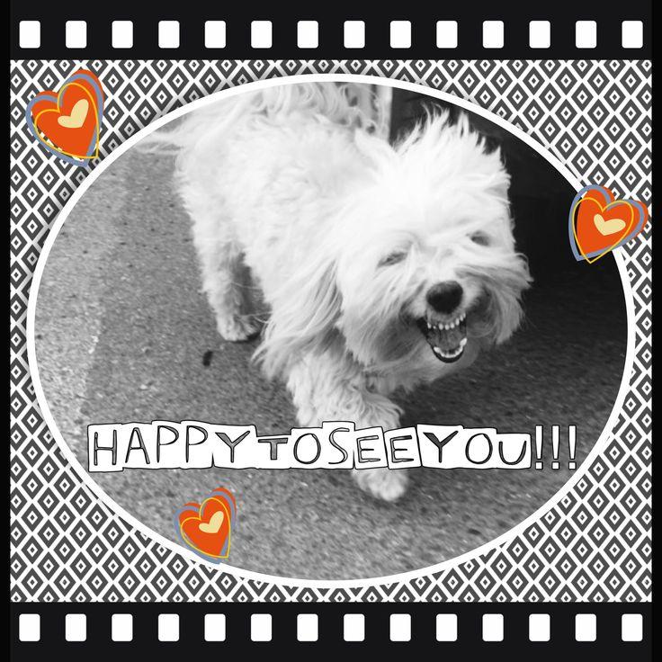 Nikko the smiling dog 😍