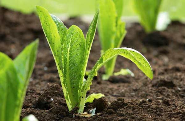 What to Do if your Soil Has Lead Contamination - Vegepod