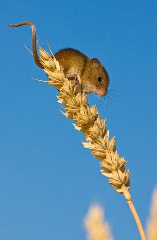 Field Mice by Jean Louis Klein & Marie Luce Hubert (14)