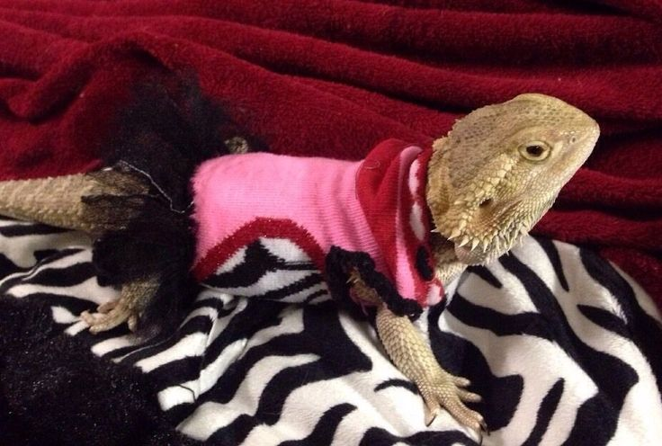 BEARDED DRAGON PRE MADE PINK DRESS WITH TUTU ATTACHED  | eBay