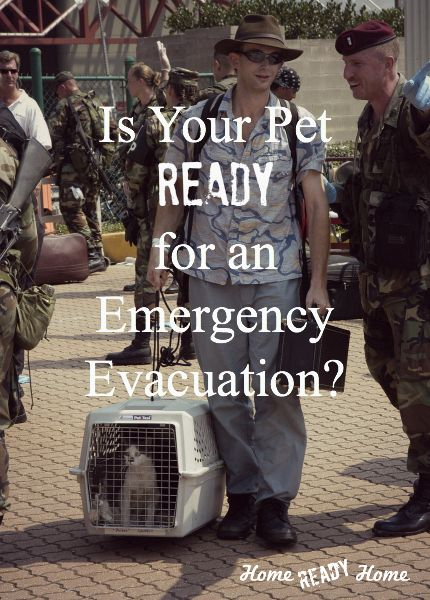 Is Your Pet Ready for an Emergency Evacuation? (Home Ready Home) ~ Get things ready now, so that you can just grab and go for all your pet's needs.