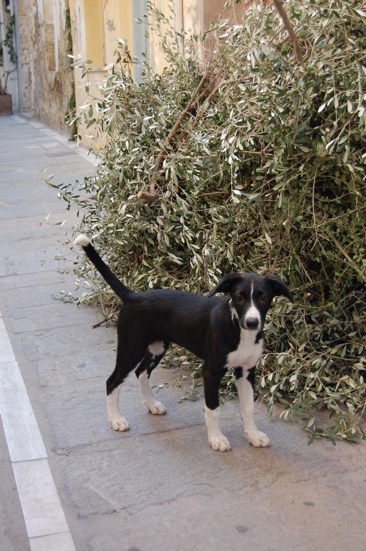 Puppy, Crete