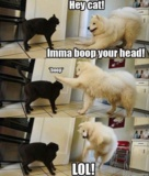 : But Boop, Make Me Laughing, Dogs And Cat, Hey Cat, Silly Dogs, Dogs Cat, Funny Stuff, Funny Animal, So Funny