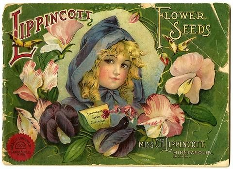 """Little-Blue-Riding-Hood""  and sweetpeas are pictured on Carrie Lippincott's 1908 catalog cover. Carrie Lippincott, the self-proclaimed ""pioneer seedswoman"" and ""first woman in the flower seed industry"" established her mail-order flower seed business in Minneapolis in 1891. Sending out smaller 5 inch by 7 inch catalogs with colorful covers, often featuring children, her business was aimed at women customers."