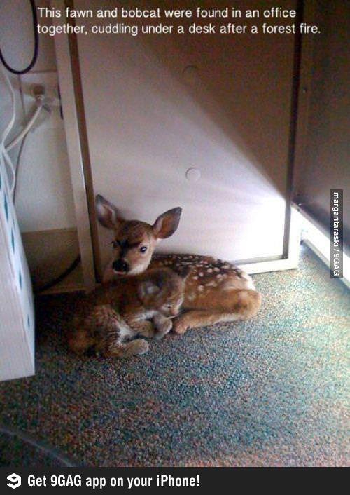 Scared animals