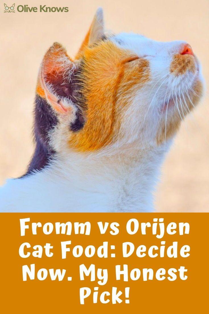 Fromm Vs Orijen Cat Food Decide Now My Honest Pick Oliveknows Cat Food Cat Food Reviews Cats