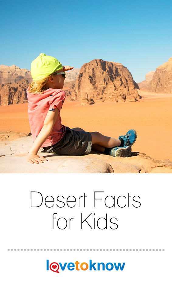 Deserts are fun and exciting places filled with a variety ...