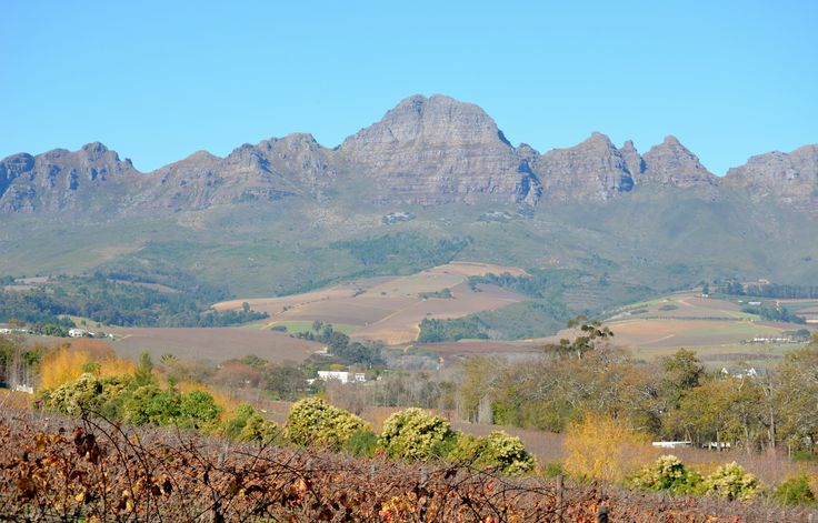 Helderberg mountain during June - as seen from Root 44 and the R44 - between Stellenbosch and Somerset West. Last brownish vineyard leaves still visible just before they fall off. #Helderbergmountain #Stellenbosch #SomersetWest