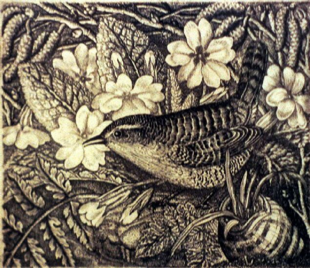Wren and Primroses by Robin Tanner View original image