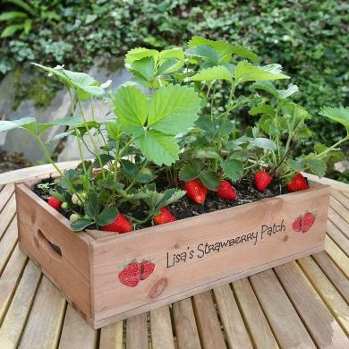 Half Plantabox Crate with Strawberry Seeds