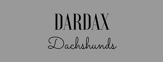 DarDax Dachshunds. Miniature Dachshund breeder in the United Kingdom. Specialising in Miniature Smooth Haired Dachshunds.