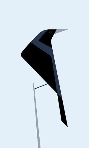 ephemeraa: tordo / austral blackbird (by - feral -) #graphic #illustration #bird