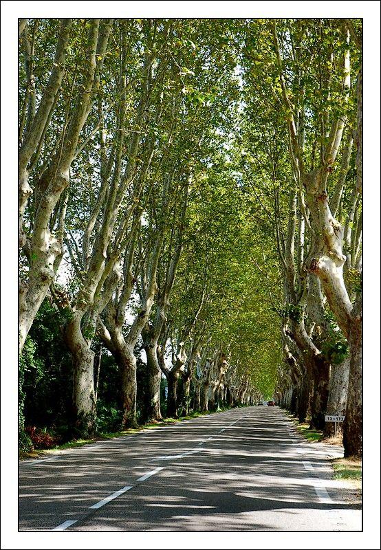 Saint-Remy-de-Provence. Les routes sont bordées de platanes pour abriter les voyageurs du soleil.