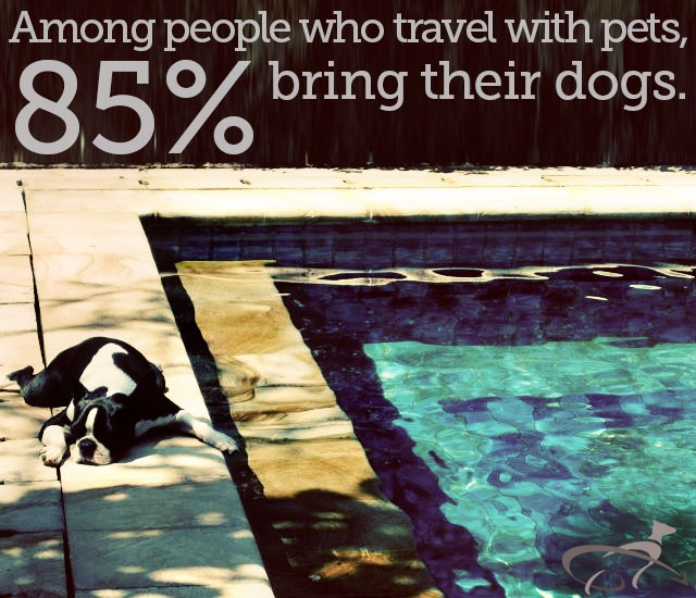 Among people who travel with pets, 85% bring their dogs, @PetRelocation survey finds.