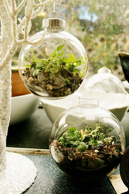 terrarium ornaments from little big: Christmas Pinterest, Christmas Crafts, Thrifty Crafts, Living Ornaments, Ornaments Terrarium, Terrarium Ornaments, Christmas Ornaments, Thrifty Living, Christmas Terrarium
