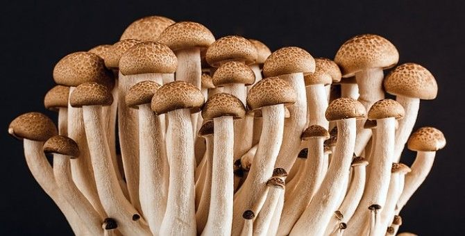 Discover The Magic of Mushrooms