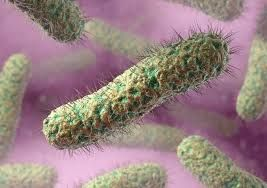 Image result for picture of a typical bacteria