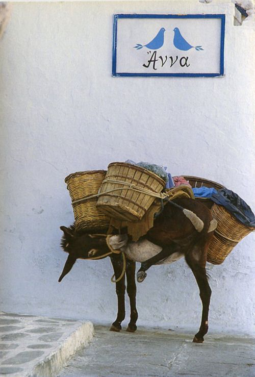 Greek donkey ♥