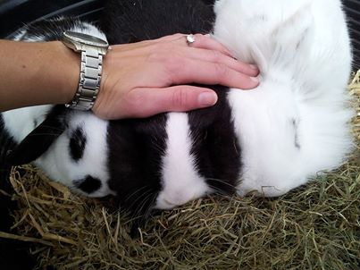 #bunnyvalentines #ahutchisnotenough  Look at these beuatiful bunny rabbits having a lovely valentines snuggle!  A Hutch Is Not Enough!